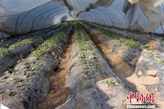 皖北发展现代农业助力脱贫。 吴卫中 摄