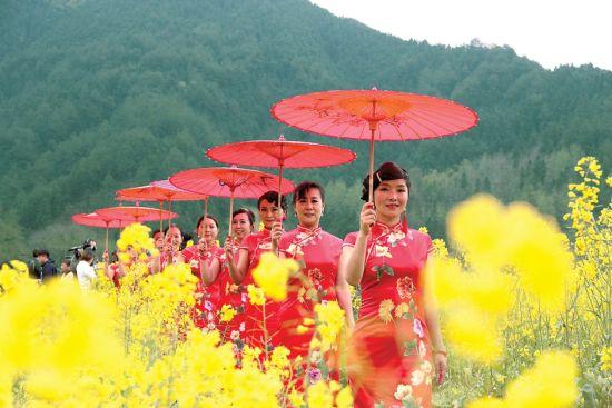 近日,在休宁县板桥乡,一群旗袍爱好者在呈村百亩油菜花田边漫步走秀,展示东方旗袍文化的神韵和徽州女人的魅力。通讯员 陈佳/摄