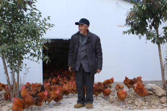 图为元圩村贫困户在养鸡场上班(资料图)