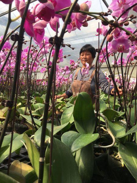 56岁的李家珍在兰君园艺里务工,她说,离家近,收入也可以,还能照顾到家里的大小事情。