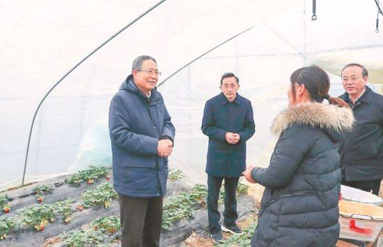 1月7日,省委书记李锦斌深入定远县西卅店镇高潮村草莓大棚,与村民薛荣面对面交流,实地调研了解她的生活生产情况。徐国康摄