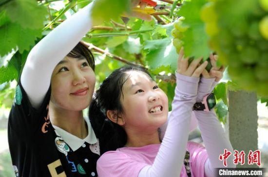图为在安徽省合肥市包河区大圩镇鲜来鲜得葡萄采摘园,游客正带着小朋友体验亲子采摘乐趣。 张娅子 摄.jpg