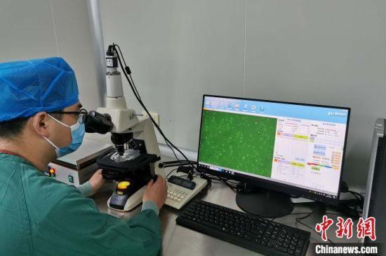 医生观察收集的精子样本。安医大一附院供图