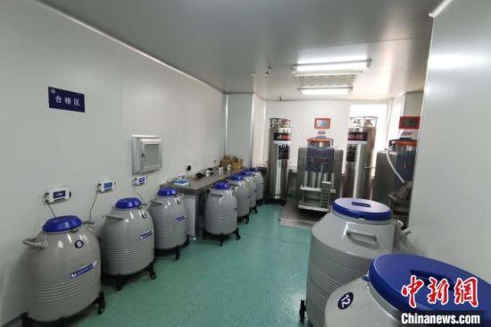 合格的精液标本被放入零下196摄氏度的液氮罐内储存。安医大一附院供图
