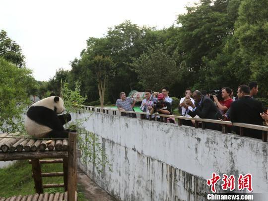 十国驻华使节走进皖南 体验中国传统文化