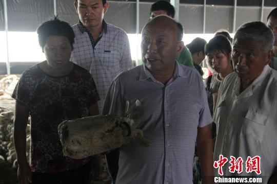 """安徽肥西:""""蘑菇大王""""助力残疾人脱贫"""