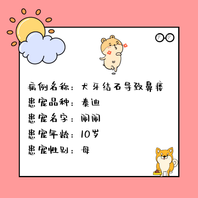 瑞派北京关忠管庄动物医院关爱宠物口腔守护微笑!